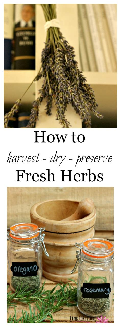 how to harvest herbs how to harvest dry and preserve fresh herbs pink fortitude llc