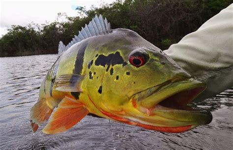 river fish basin animals cc freshwater fishing