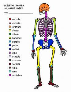 New Skeletal System Coloring Book Dance Anatomy