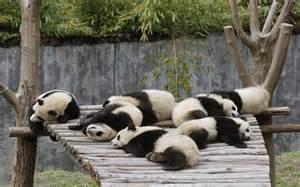 パンダ:壁紙】 パンダ / 大熊猫 ...