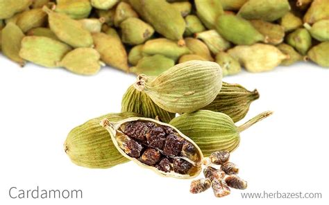 what is cardamom cardamom herbazest