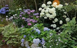 Welche Pflanzen Passen Gut Zu Hortensien : 1000 images about vorgarten nordseite on pinterest ~ Lizthompson.info Haus und Dekorationen
