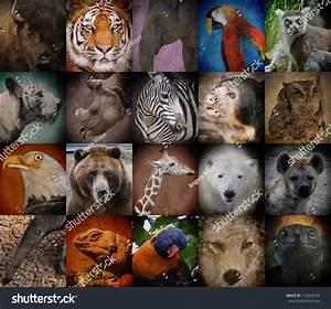 Mahi Tahi Rakaia School: Animals on my farm!