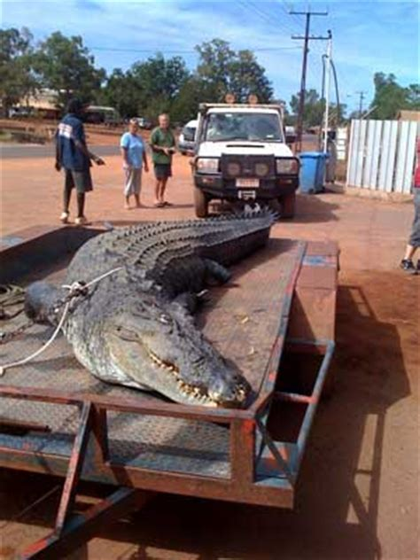 Fishing Boat Jobs Broome by Crocodile Attacks In Australia Crocodile Attacks From