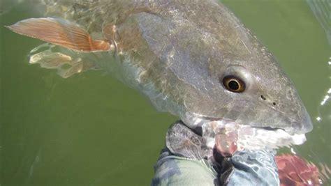 fish eat   lot  themand  ocean