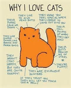 i like cats why i cats cats fan 37993806 fanpop