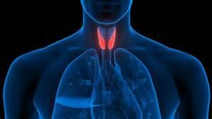 Studies On Cbd And Endocrine Disorders