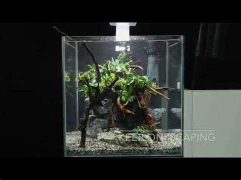 How To Set Up An Aquascape by How To Set Up A Simple Yet Beautiful Aquascape In One