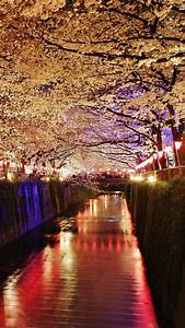 Cherry, Blossom, Tree, At, Night, Wallpapers