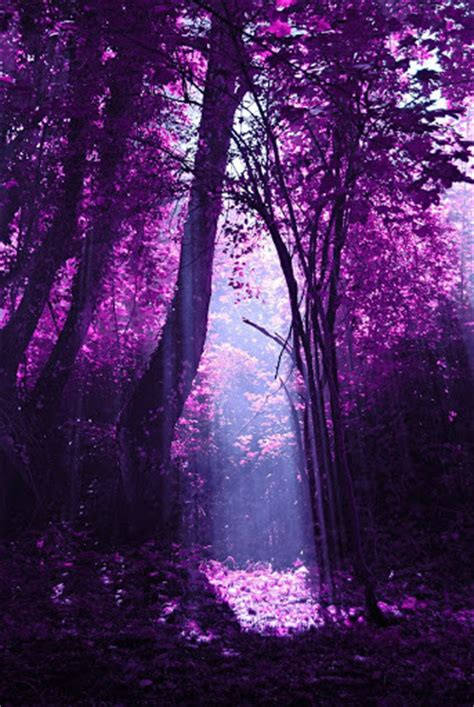 Purple Trees Pictures, Photos, and Images for Facebook ...