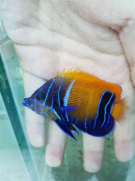 jenis ikan hias air laut biasa dipelihara binatang