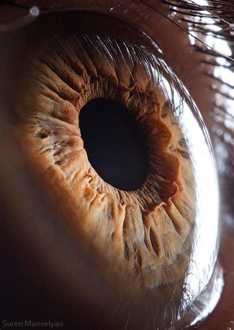 macro photography  human eyes creatives wall