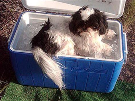 funny pics dog days  summer
