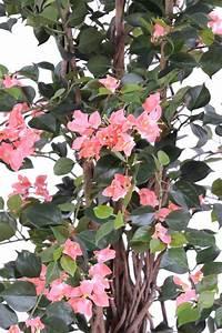 Plante Fleurie Intérieur : plante artificielle fleurie bougainvill e int rieur ~ Premium-room.com Idées de Décoration