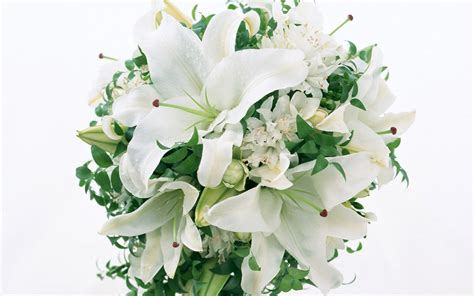 40 Nice White Flowers Wallpapers Noname