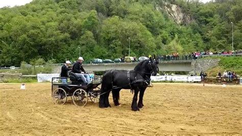carrozza con cavalli esibizione cavalli frisoni con carrozza festa s pio