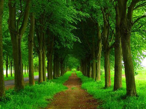 Background Greenery Wallpaper by Greenery Wallpapers Wonderwordz