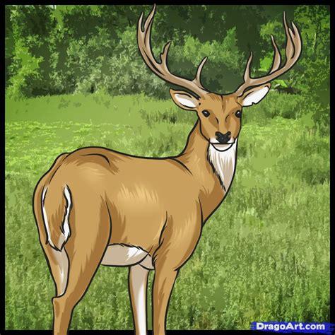 draw  deer step  step forest animals animals