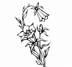 25 Desenhos de Flores para Pintar/Colorir: Imprimir ou Online