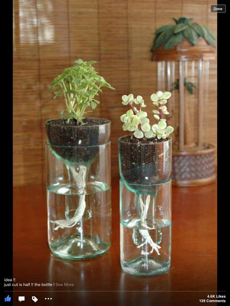 recycle soda bottles  plant holders crafty ideas
