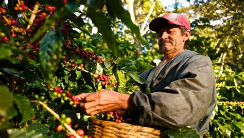Coffee Industry Aims To Keep Its Farmers From Going Hungry