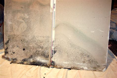 How To Remove Mold From Basement by Leak Job