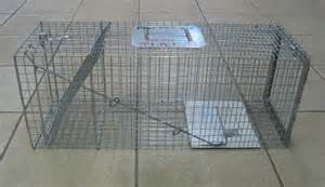 cat traps feral cats and feral cat services trapping a feral cat
