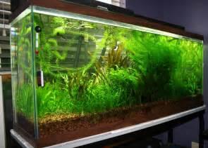 aquarium fish and plants fish tank plants aquarium fish tank plants discount decorations wholesale 2017