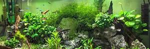 Optimale Aquarium Temperatur : what is the ideal water temperature for your fish tank ~ Yasmunasinghe.com Haus und Dekorationen