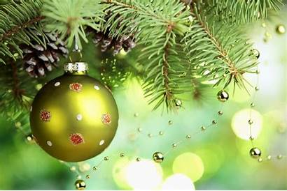 Christmas Decoration Amazing Tree Wallpapers Tablet Branch