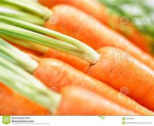 Bunch Of Crunchy Carrots Close-up Royalty Free Stock