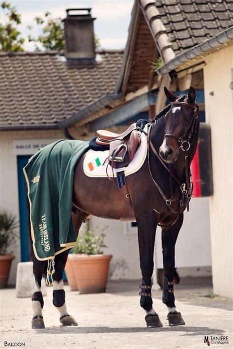 horse horses oldenburg jumping shane stallion balloon breen equestrian tackless equine warmblood cheval blanc noir et goldrush bareback gifs paint