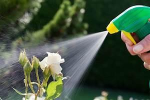 Insecticide Savon Noir Bicarbonate : insecticide naturel recette pour fabriquer son insecticide ~ Dailycaller-alerts.com Idées de Décoration