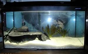 60 Liter Becken : mein aquarium ~ Michelbontemps.com Haus und Dekorationen