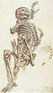 A Human Skeleton Drawing by James Ward