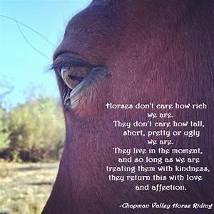 Horse Quote - I... Ride Horse Quotes