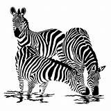 Zebre Zebres Zebras Appliques Zèbre Hewan Henghome Ironing Vasarely Cebra sketch template