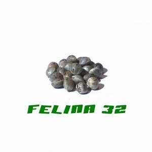 Felina Online Shop : hanfsamen felina 32 200stk auf tempel online kaufen ~ Eleganceandgraceweddings.com Haus und Dekorationen