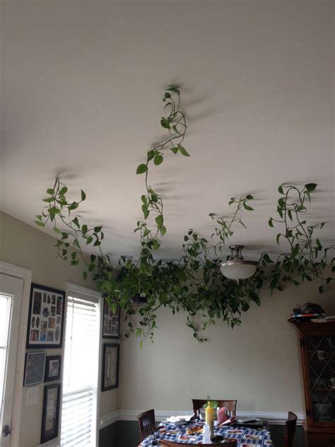 creates interesting vine plants mini garden indoor obsigen