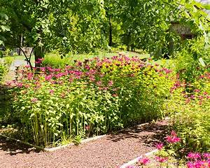 Garden of native plants moland house for Garden plant design
