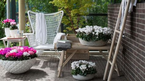 herbstbepflanzung balkon winterhart pflanzen die besten balkonpflanzen f 252 r den herbst welt