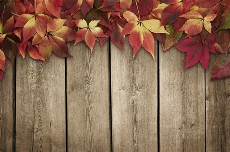 autumn leaves  blue wooden background  copy space