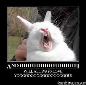 animal meme   Cakey Hankerson: Great Adventures