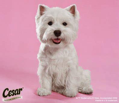 cesar dog food  sample myfreeproductsamplescom
