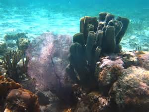 Underwater Sea Sponge