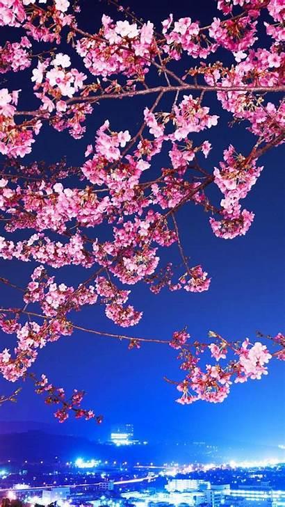 Blossom Cherry Flowers Iphone Anime Sakura Branches