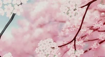 Blossom Cherry Gifs Nezuko Sakuras Reins Princess