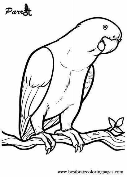 Parrot Coloring Printable Clipart Parrots Window Dibujos