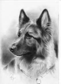 German Shepherd Dog Drawings