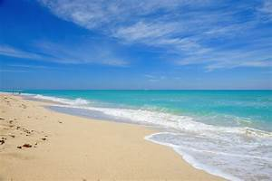 5 Reasons To Come To Venice Beach  Florida In The Summer